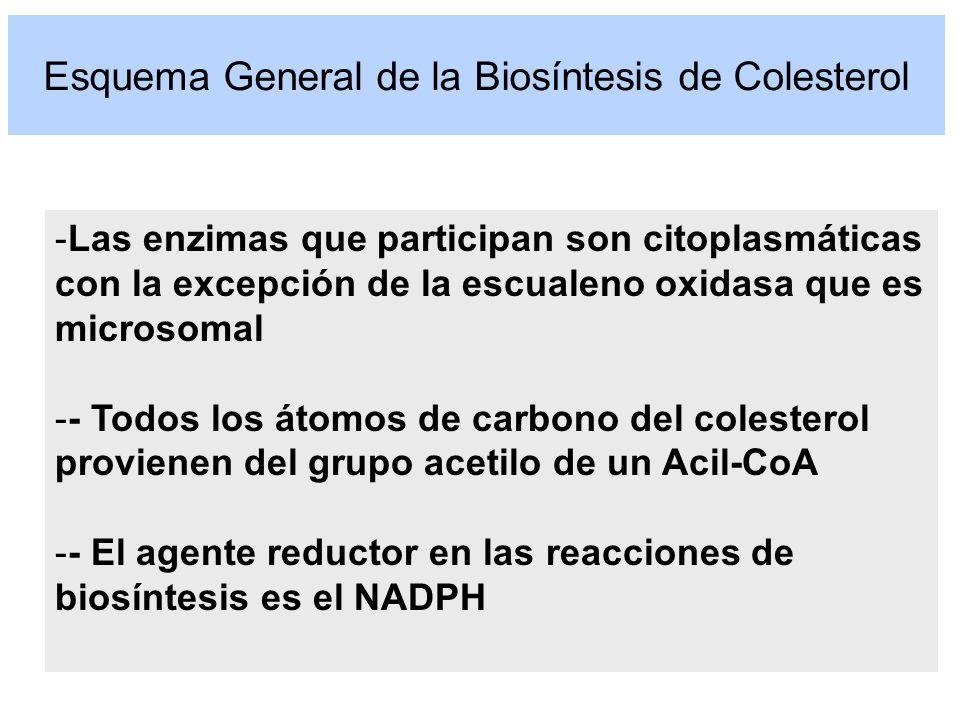 Esquema General de la Biosíntesis de Colesterol -Las enzimas que participan son citoplasmáticas con la excepción de la escualeno oxidasa que es micros