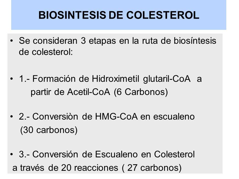 BIOSINTESIS DE COLESTEROL Se consideran 3 etapas en la ruta de biosíntesis de colesterol: 1.- Formación de Hidroximetil glutaril-CoA a partir de Aceti
