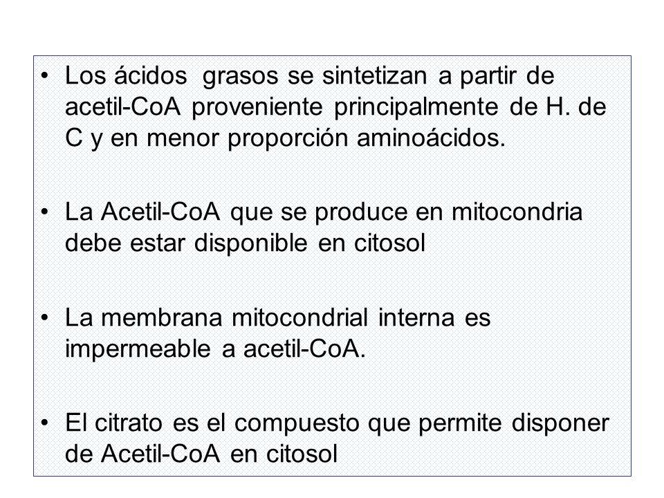 Los ácidos grasos se sintetizan a partir de acetil-CoA proveniente principalmente de H. de C y en menor proporción aminoácidos. La Acetil-CoA que se p