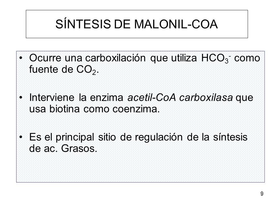 9 SÍNTESIS DE MALONIL-COA Ocurre una carboxilación que utiliza HCO 3 - como fuente de CO 2. Interviene la enzima acetil-CoA carboxilasa que usa biotin