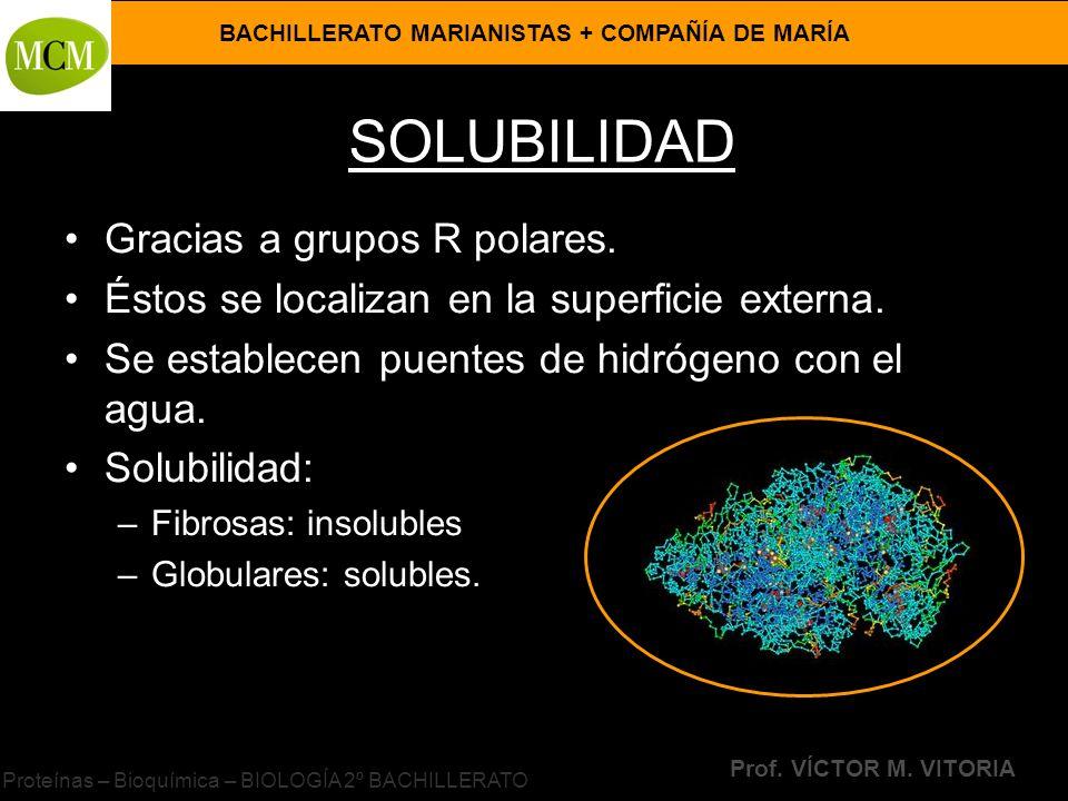 BACHILLERATO MARIANISTAS + COMPAÑÍA DE MARÍA Prof. VÍCTOR M. VITORIA Proteínas – Bioquímica – BIOLOGÍA 2º BACHILLERATO SOLUBILIDAD Gracias a grupos R