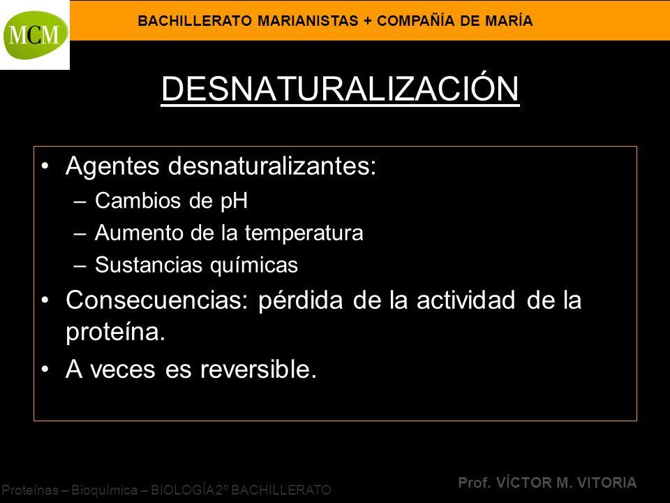 BACHILLERATO MARIANISTAS + COMPAÑÍA DE MARÍA Prof. VÍCTOR M. VITORIA Proteínas – Bioquímica – BIOLOGÍA 2º BACHILLERATO DESNATURALIZACIÓN Agentes desna