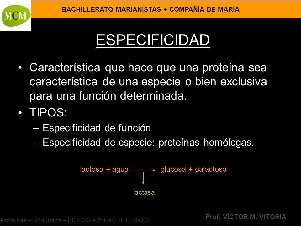 BACHILLERATO MARIANISTAS + COMPAÑÍA DE MARÍA Prof. VÍCTOR M. VITORIA Proteínas – Bioquímica – BIOLOGÍA 2º BACHILLERATO ESPECIFICIDAD Característica qu
