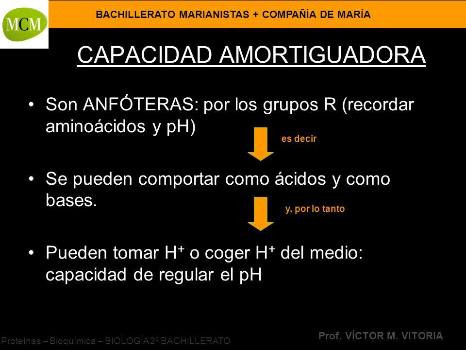 BACHILLERATO MARIANISTAS + COMPAÑÍA DE MARÍA Prof. VÍCTOR M. VITORIA Proteínas – Bioquímica – BIOLOGÍA 2º BACHILLERATO CAPACIDAD AMORTIGUADORA Son ANF