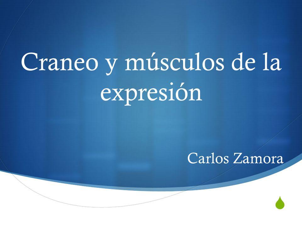 Craneo y músculos de la expresión Carlos Zamora