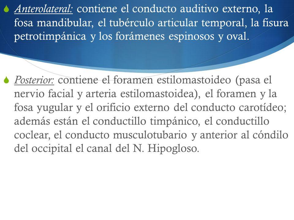 Anterolateral: contiene el conducto auditivo externo, la fosa mandibular, el tubérculo articular temporal, la fisura petrotimpánica y los forámenes es