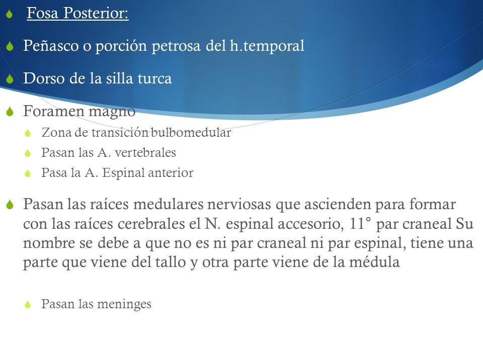 Fosa Posterior: Peñasco o porción petrosa del h.temporal Dorso de la silla turca Foramen magno Zona de transición bulbomedular Pasan las A. vertebrale