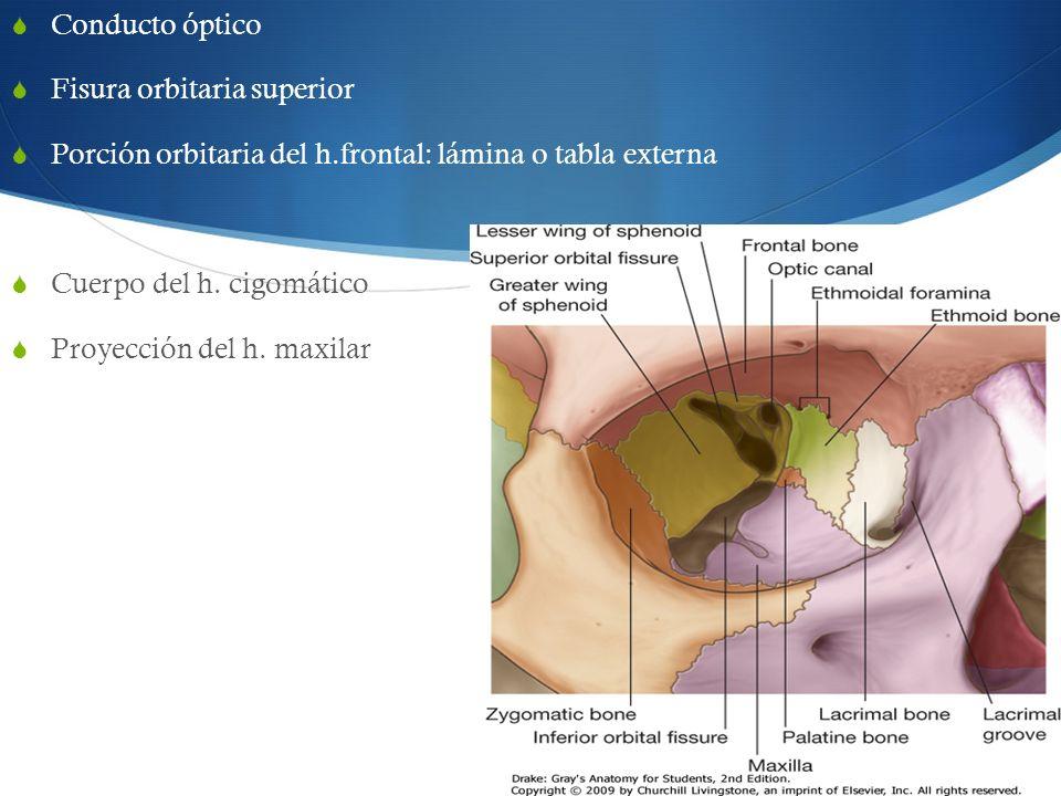 Conducto óptico Fisura orbitaria superior Porción orbitaria del h.frontal: lámina o tabla externa Cuerpo del h. cigomático Proyección del h. maxilar