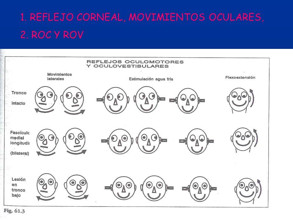 1. REFLEJO CORNEAL, MOVIMIENTOS OCULARES, 2. ROC Y ROV