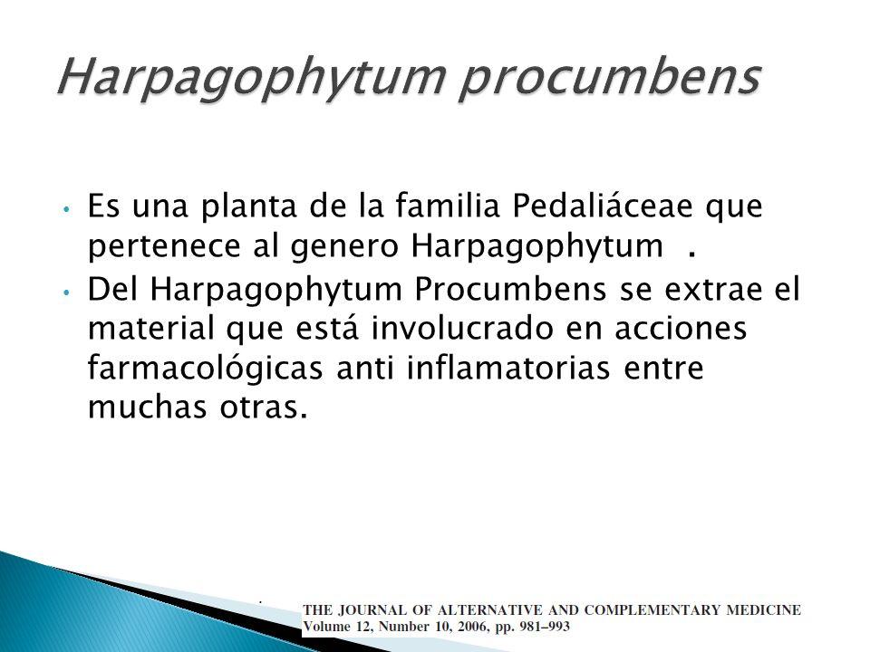 Es una planta de la familia Pedaliáceae que pertenece al genero Harpagophytum. Del Harpagophytum Procumbens se extrae el material que está involucrado