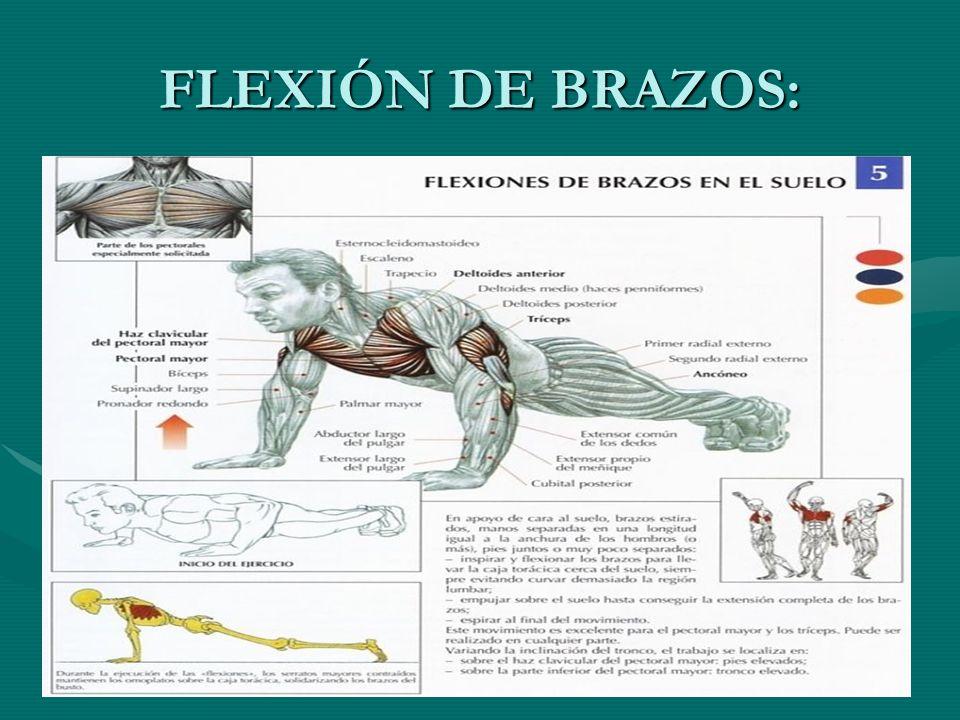 FLEXIÓN DE BRAZOS Flexiones de brazos en el sueloFlexiones de brazos en el suelo Disponemos de tres niveles Disponemos de tres niveles Iniciación: pies y rodillas apoyados en el suelo.