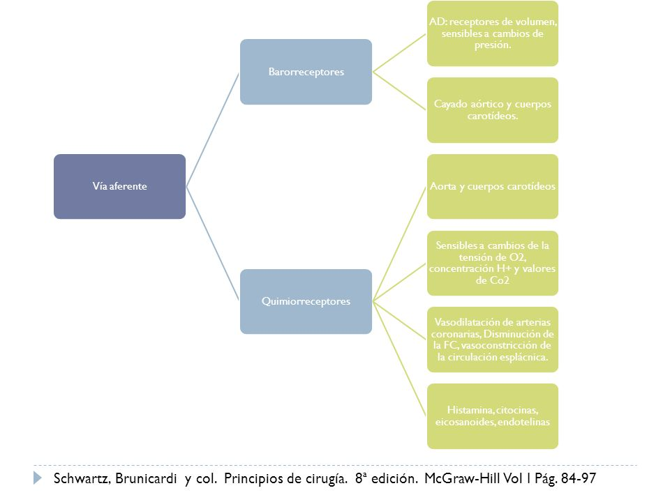 Vía aferenteBarorreceptores AD: receptores de volumen, sensibles a cambios de presión. Cayado aórtico y cuerpos carotídeos. QuimiorreceptoresAorta y c