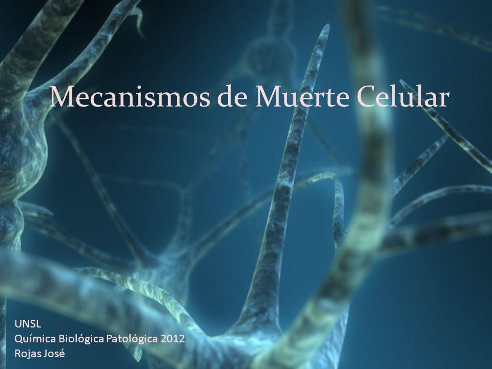 Mecanismos de Muerte Celular UNSL Química Biológica Patológica 2012 Rojas José