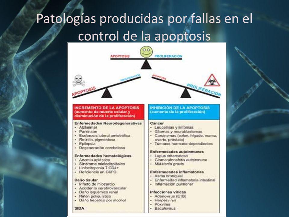 Patologías producidas por fallas en el control de la apoptosis