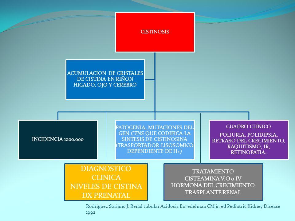 CISTINOSIS INCIDENCIA 1:100.000 PATOGENIA, MUTACIONES DEL GEN CTNS QUE CODIFICA LA SINTESIS DE CISTINOSINA (TRASPORTADOR LISOSOMICO DEPENDIENTE DE H+)