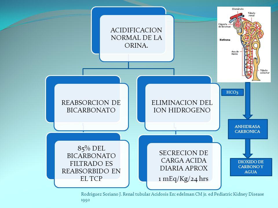 ACIDIFICACION NORMAL DE LA ORINA. REABSORCION DE BICARBONATO 85% DEL BICARBONATO FILTRADO ES REABSORBIDO EN EL TCP ELIMINACION DEL ION HIDROGENO SECRE