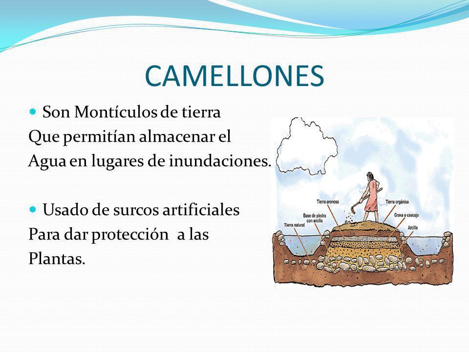 Sistemas De Riego Los conocimientos hidráulicos canales y bocatomas-, permitieron la irrigación y el cultivo, especialmente del maíz.