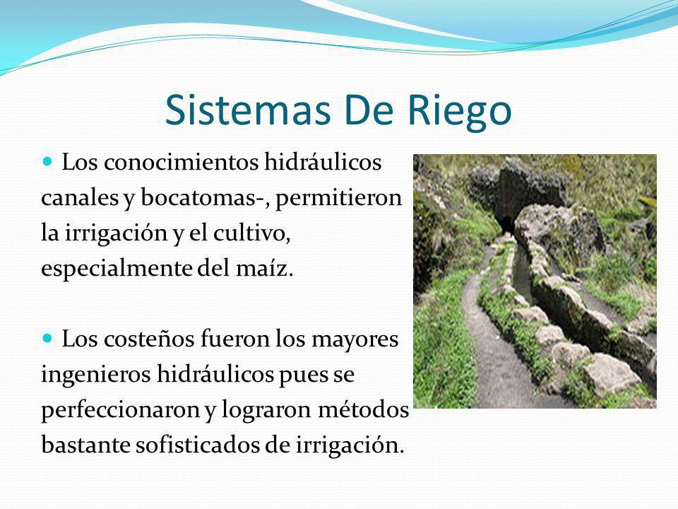 Sistemas De Riego Los conocimientos hidráulicos canales y bocatomas-, permitieron la irrigación y el cultivo, especialmente del maíz. Los costeños fue