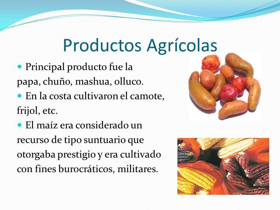 Productos Agrícolas Principal producto fue la papa, chuño, mashua, olluco. En la costa cultivaron el camote, frijol, etc. El maíz era considerado un r