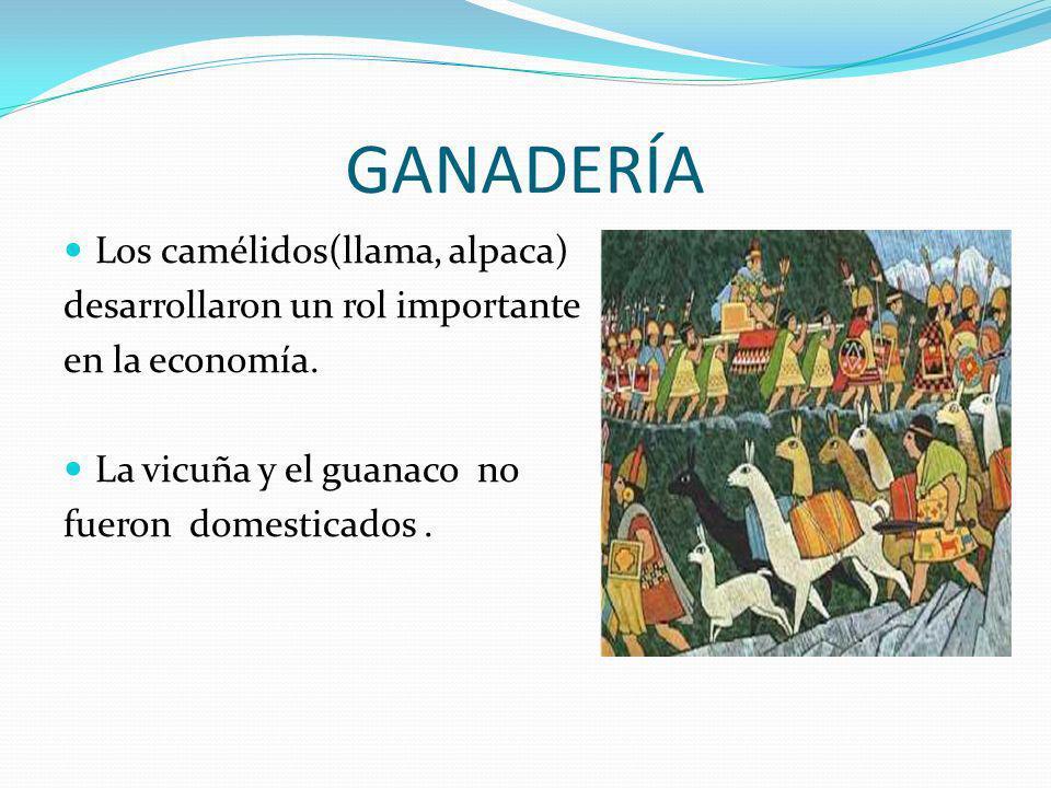 GANADERÍA Los camélidos(llama, alpaca) desarrollaron un rol importante en la economía. La vicuña y el guanaco no fueron domesticados.
