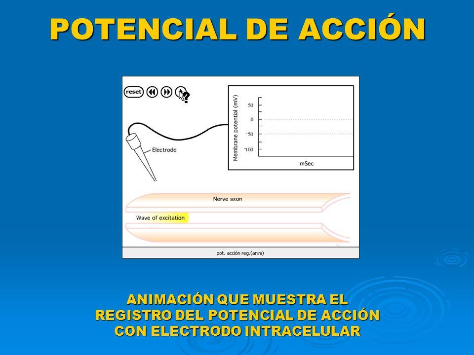 POTENCIAL DE ACCIÓN ANIMACIÓN QUE MUESTRA EL REGISTRO DEL POTENCIAL DE ACCIÓN CON ELECTRODO INTRACELULAR
