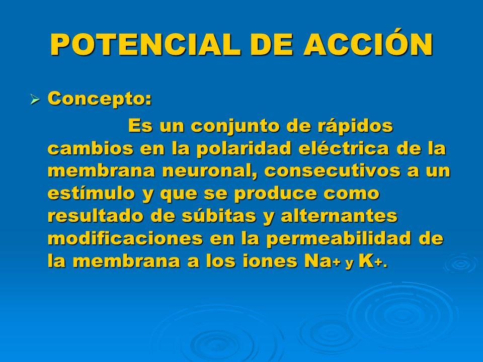 POTENCIAL DE ACCIÓN MECANISMO DE PROUCCIÓN: MECANISMO DE PROUCCIÓN: Debemos recordar que partimos de la situación de potencial de membrana en reposo, en la cual el Na + no difunde fácilmente a través de la membrana, mientras que el K + si lo hace desde el interior hacia el exterior, pero que gracias a la bomba de Na-K las concentraciones de ambos iones se mantienen, de forma tal que el K + continúa más concentrado en el interior y el Na + en el exterior.