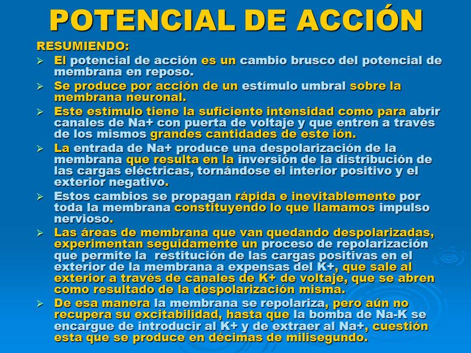 POTENCIAL DE ACCIÓN RESUMIENDO: El potencial de acción es un cambio brusco del potencial de membrana en reposo. El potencial de acción es un cambio br