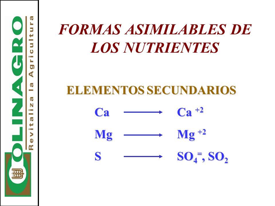 FORMAS ASIMILABLES DE LOS NUTRIENTES ELEMENTOS SECUNDARIOS CaCa +2 MgMg +2 SSO 4 =, SO 2