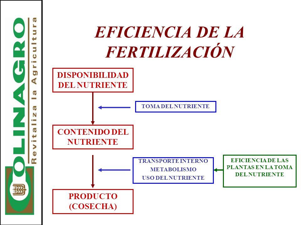EFICIENCIA DE LA FERTILIZACIÓN DISPONIBILIDAD DEL NUTRIENTE CONTENIDO DEL NUTRIENTE TOMA DEL NUTRIENTE PRODUCTO (COSECHA) TRANSPORTE INTERNO METABOLIS