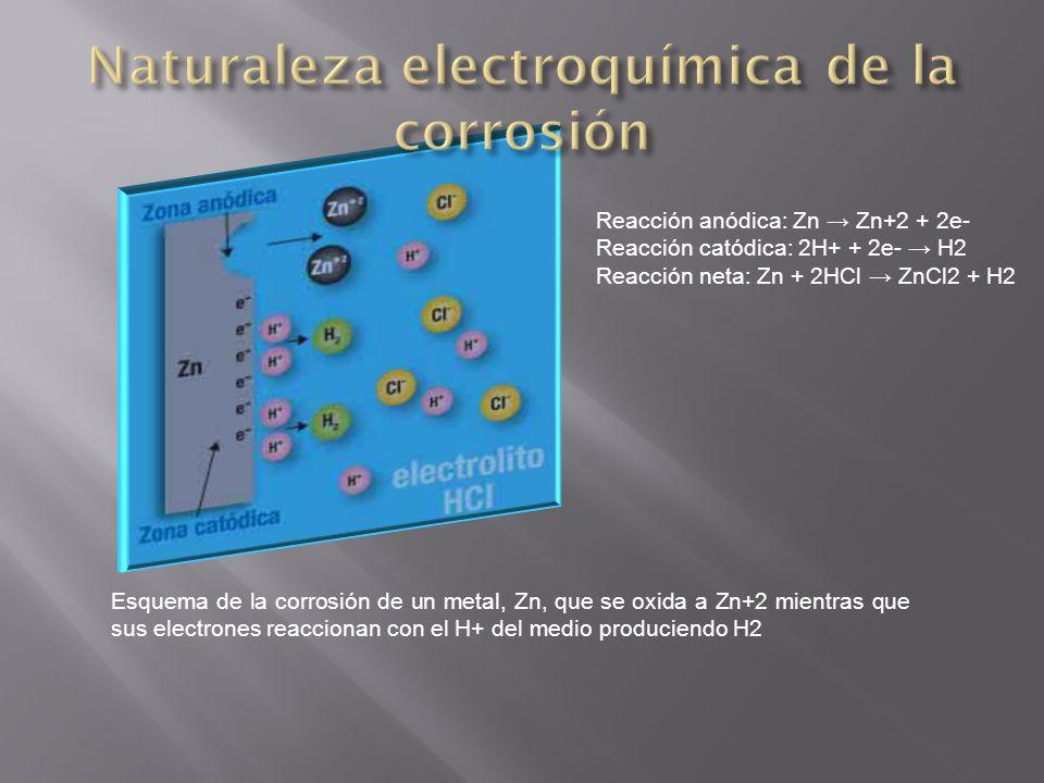 Esquema de la corrosión de un metal, Zn, que se oxida a Zn+2 mientras que sus electrones reaccionan con el H+ del medio produciendo H2 Reacción anódic