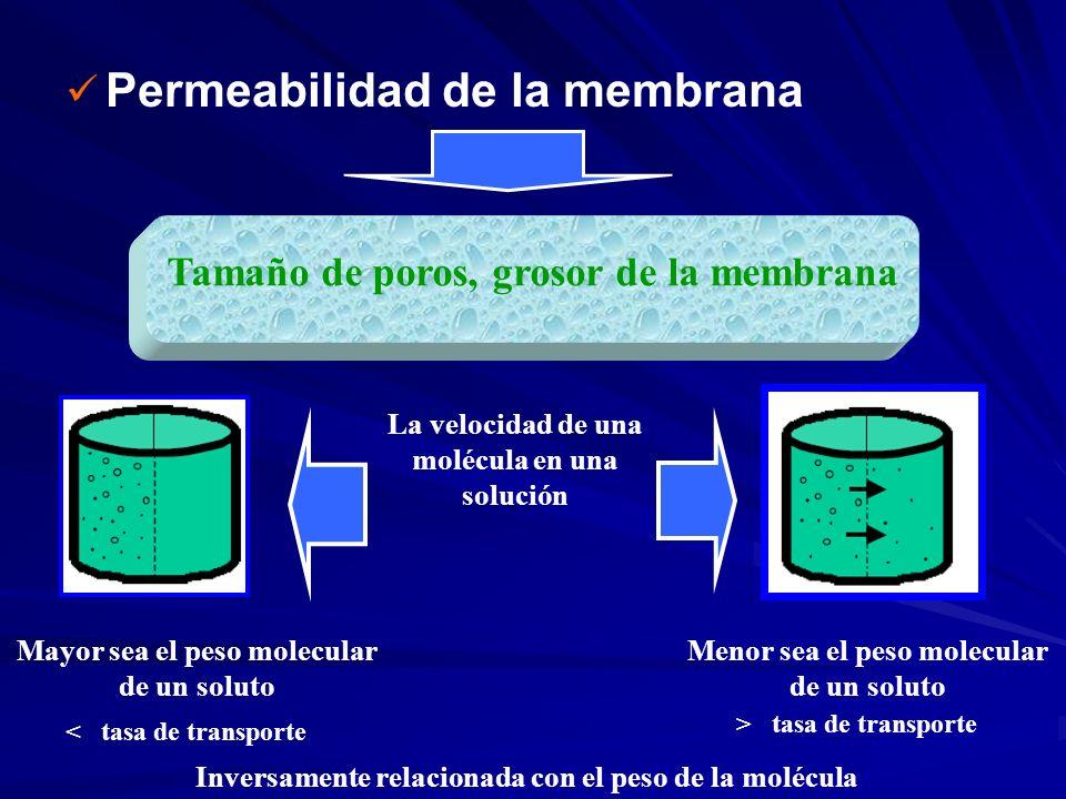 Permeabilidad de la membrana Tamaño de poros, grosor de la membrana Mayor sea el peso molecular de un soluto La velocidad de una molécula en una soluc