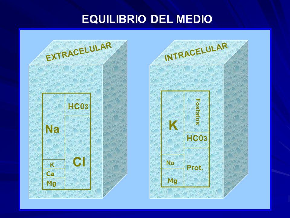 Cl HC0 3 Na K Ca Mg EXTRACELULARINTRACELULAR K Na Mg Prot. HC0 3 Fosfatos EQUILIBRIO DEL MEDIO
