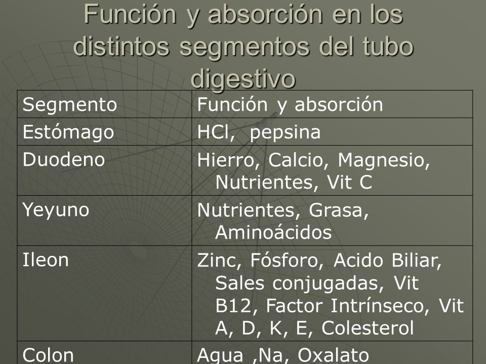 Función y absorción en los distintos segmentos del tubo digestivo SegmentoFunción y absorción EstómagoHCl, pepsina DuodenoHierro, Calcio, Magnesio, Nu