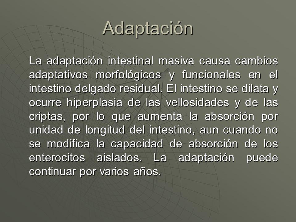Adaptación La adaptación intestinal masiva causa cambios adaptativos morfológicos y funcionales en el intestino delgado residual. El intestino se dila