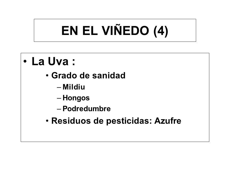 EN EL VIÑEDO (4) La Uva : Grado de sanidad –Mildiu –Hongos –Podredumbre Residuos de pesticidas: Azufre