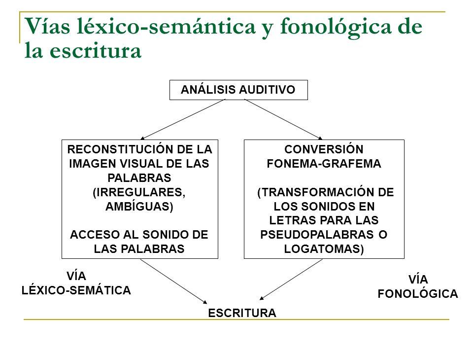 Vías léxico-semántica y fonológica de la escritura ANÁLISIS AUDITIVO RECONSTITUCIÓN DE LA IMAGEN VISUAL DE LAS PALABRAS (IRREGULARES, AMBÍGUAS) ACCESO