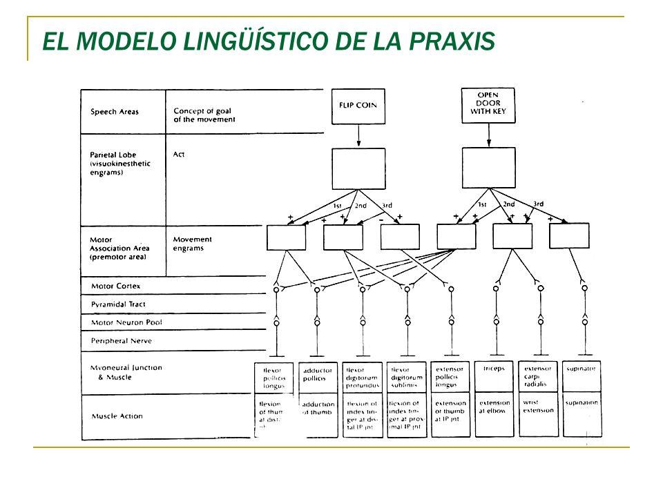 EL MODELO LINGÜÍSTICO DE LA PRAXIS