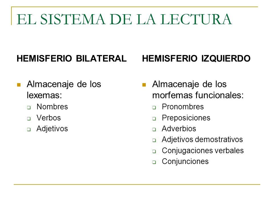 EL SISTEMA DE LA LECTURA HEMISFERIO BILATERAL Almacenaje de los lexemas: Nombres Verbos Adjetivos HEMISFERIO IZQUIERDO Almacenaje de los morfemas func