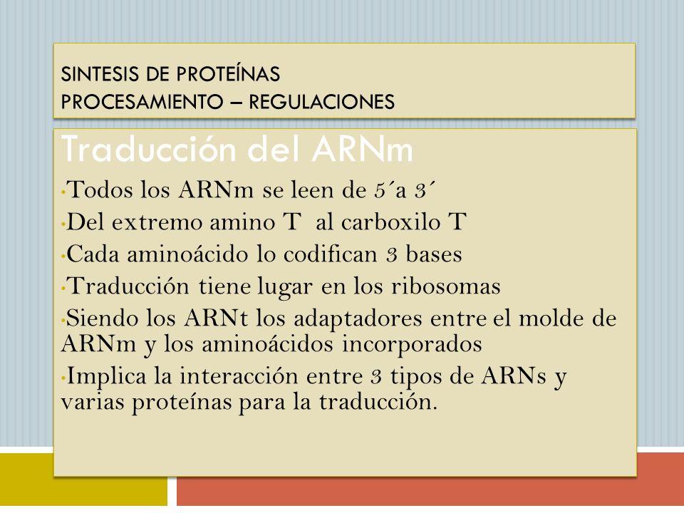 SINTESIS DE PROTEÍNAS PROCESAMIENTO – REGULACIONES Traducción del ARNm Todos los ARNm se leen de 5´a 3´ Del extremo amino T al carboxilo T Cada aminoá