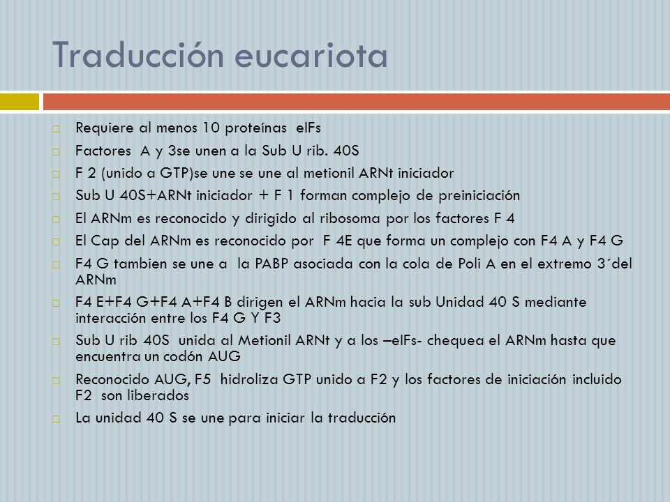 Traducción eucariota Requiere al menos 10 proteínas eIFs Factores A y 3se unen a la Sub U rib. 40S F 2 (unido a GTP)se une se une al metionil ARNt ini
