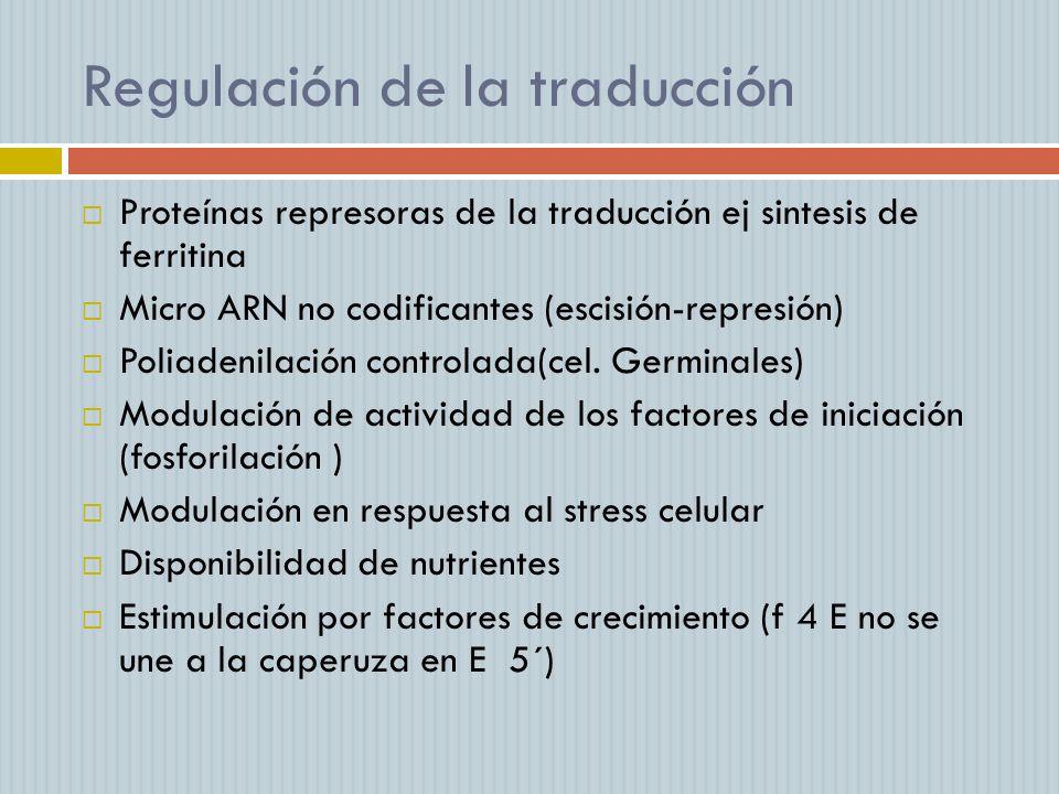 Regulación de la traducción Proteínas represoras de la traducción ej sintesis de ferritina Micro ARN no codificantes (escisión-represión) Poliadenilac
