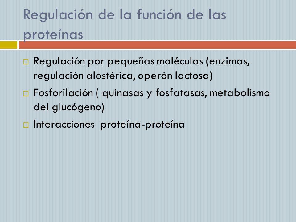 Regulación de la función de las proteínas Regulación por pequeñas moléculas (enzimas, regulación alostérica, operón lactosa) Fosforilación ( quinasas
