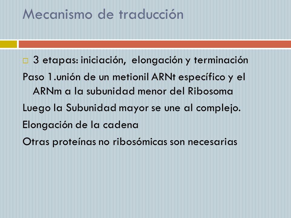 Mecanismo de traducción 3 etapas: iniciación, elongación y terminación Paso 1.unión de un metionil ARNt específico y el ARNm a la subunidad menor del