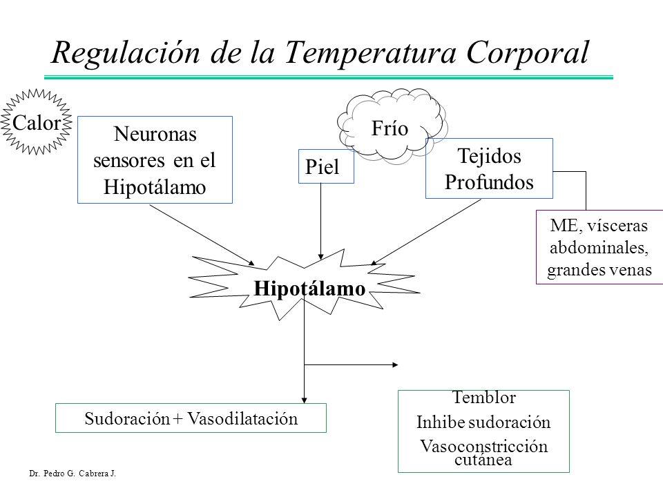 Regulación de la Temperatura Corporal Calor Sudoración + Vasodilatación Piel Tejidos Profundos Neuronas sensores en el Hipotálamo ME, vísceras abdomin
