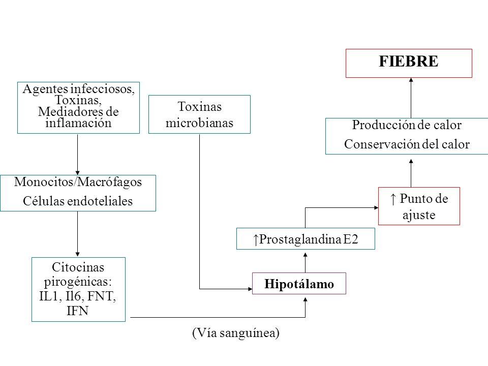 Agentes infecciosos, Toxinas, Mediadores de inflamación Monocitos/Macrófagos Células endoteliales Citocinas pirogénicas: IL1, Il6, FNT, IFN Hipotálamo
