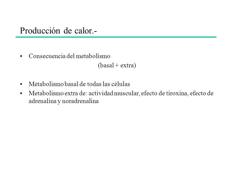 Producción de calor.- Consecuencia del metabolismo (basal + extra) Metabolismo basal de todas las células Metabolismo extra de: actividad muscular, ef