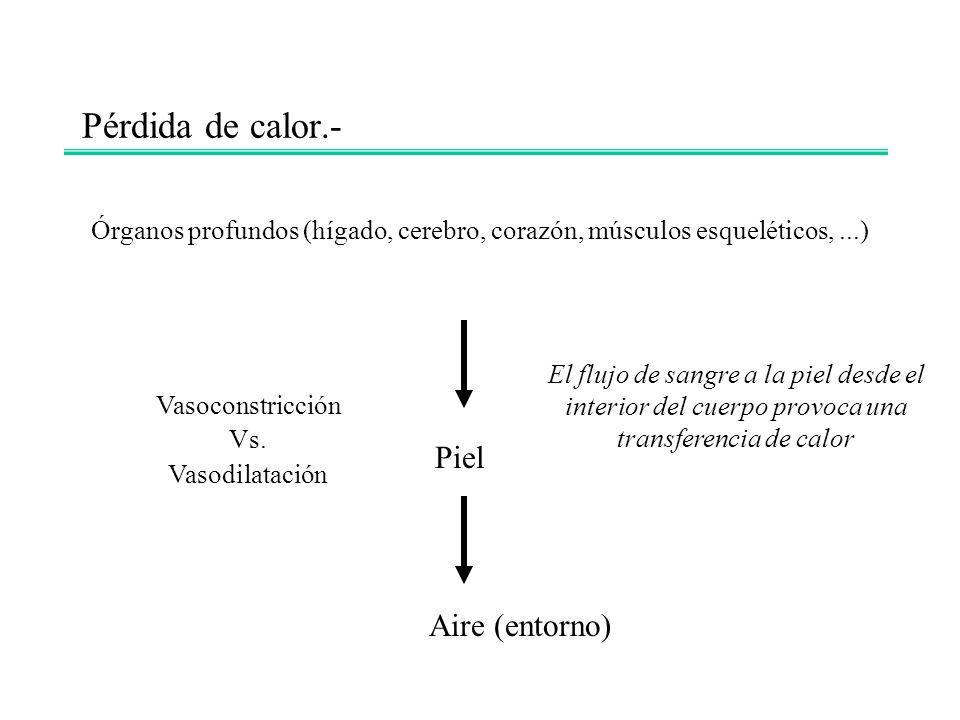 Pérdida de calor.- Órganos profundos (hígado, cerebro, corazón, músculos esqueléticos,...) Piel Aire (entorno) El flujo de sangre a la piel desde el i