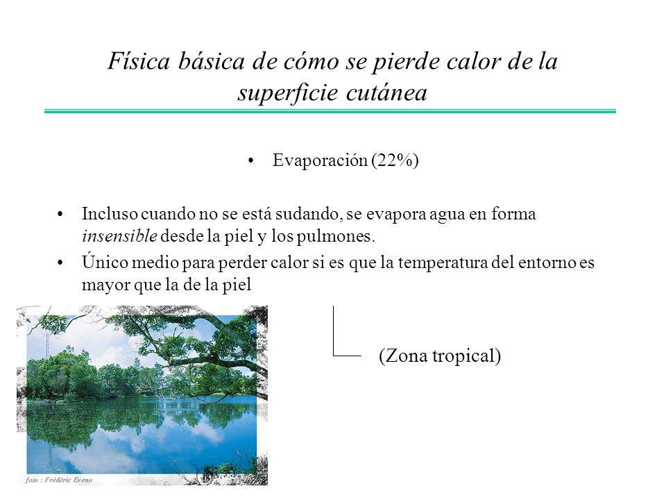 Evaporación (22%) Incluso cuando no se está sudando, se evapora agua en forma insensible desde la piel y los pulmones. Único medio para perder calor s