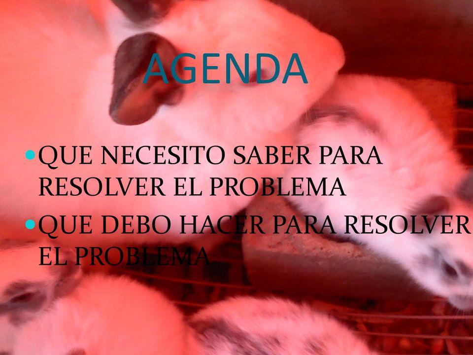AGENDA QUE NECESITO SABER PARA RESOLVER EL PROBLEMA QUE DEBO HACER PARA RESOLVER EL PROBLEMA