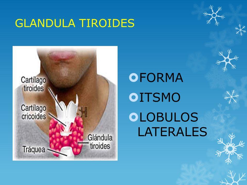 UTILIDAD CLÍNICA DE LAS DETERMINACIONES DE HORMONAS TIROIDEAS LIBRES Diagnóstico de disfunción tiroidea primaria clínica en pacientes Diagnóstico de disfunción tiroidea primaria clínica en pacientes ambulatorios ambulatorios Monitoreo del tratamiento en la fase aguda (< 3 meses) para el Monitoreo del tratamiento en la fase aguda (< 3 meses) para el hipertiroidismo (ensayo óptimo) y en la fase crónica (> 3 meses, hipertiroidismo (ensayo óptimo) y en la fase crónica (> 3 meses, ensayo adjunto) ensayo adjunto) Exclusión de hipotiroidismo (hipotalámico o pituitario) como Exclusión de hipotiroidismo (hipotalámico o pituitario) como ensayo óptimo ensayo óptimo Evaluación de la función tiroidea durante el embarazo y la terapia Evaluación de la función tiroidea durante el embarazo y la terapia estrogénica estrogénica MÉTODOS DE ESTIMADO DE LA FRACCIÓN LIBRE DE T4 (FT4E) MÉTODOS DE ESTIMADO DE LA FRACCIÓN LIBRE DE T4 (FT4E)